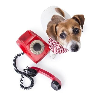 contactdog.jpg